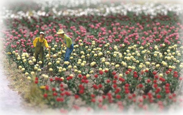 Busch Roses 1205
