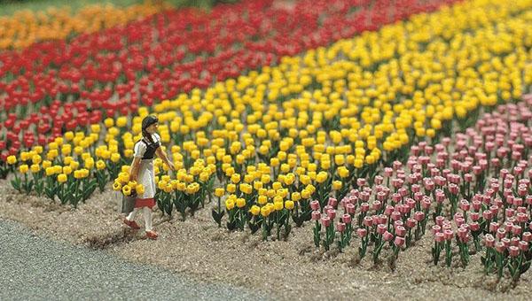 Busch Tulips 1206