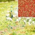 Busch 7357: Flower imitation, Summer Flowers