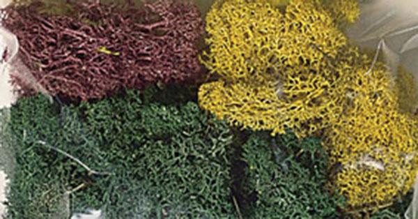 Noch 08620: Lichen, Autumn Mix XL