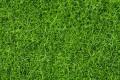 Noch 07106: Статическая трава темнозеленая 6 мм