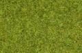 Noch 08212: Статическая трава: Луговая, 1,5 мм