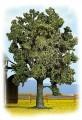 Noch 21710: Nut-tree 140